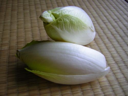 Chicorie