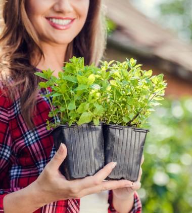 Frauen, Garten, Kräuter