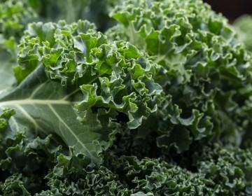 Grüne Pflanzen, Salate und Kräuter im Winter