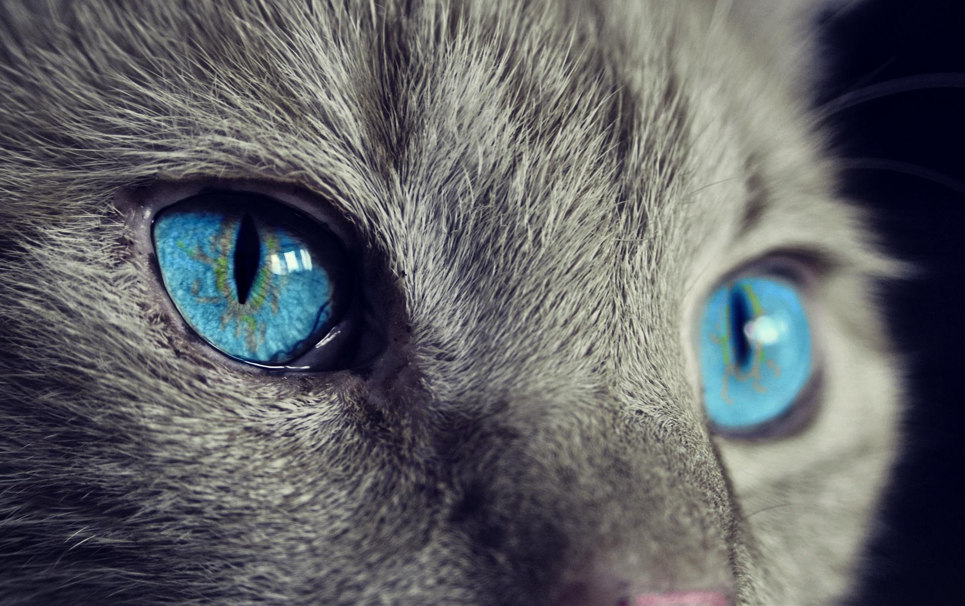 Augenwasser Für Tiere Heilkräuter Infos Heilkräuter Infos